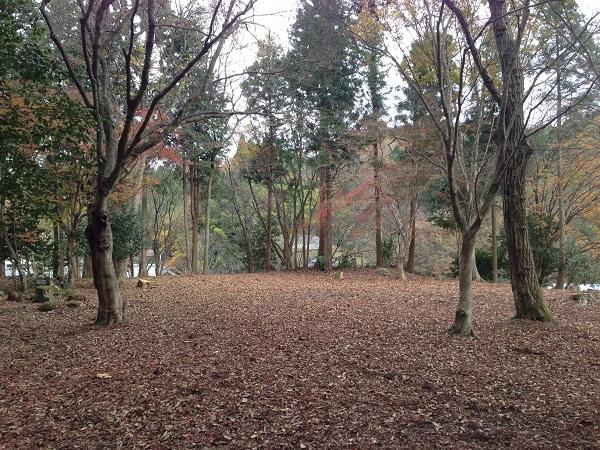 20151225_tarao_04.jpg